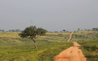 The Challenges and Learnings from COVID-19 in Uganda